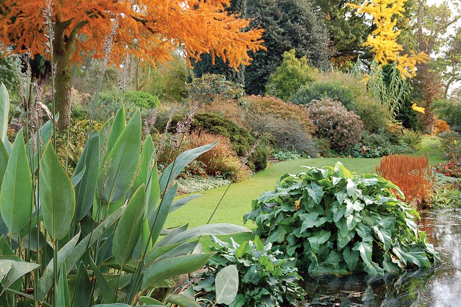 BETH CHATTO'S PLANTS AND GARDENS
