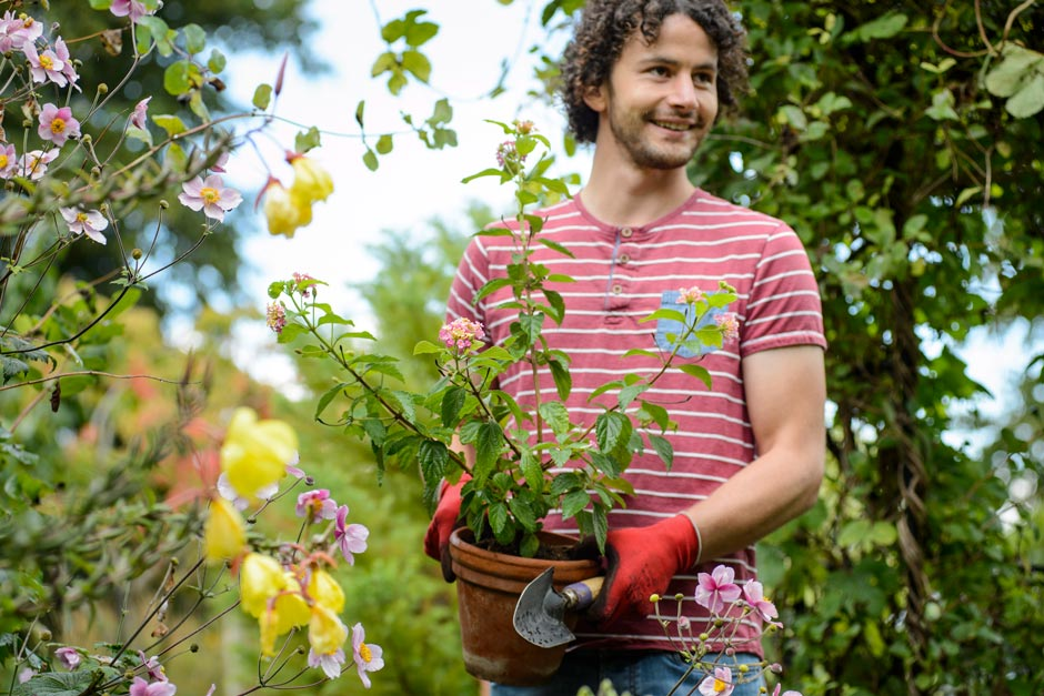 Planting for spring colour in a community garden