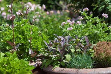 Grow your own mediterranean herbs in a pot rhs gardening - Aromatic herbs pots multiple benefits ...