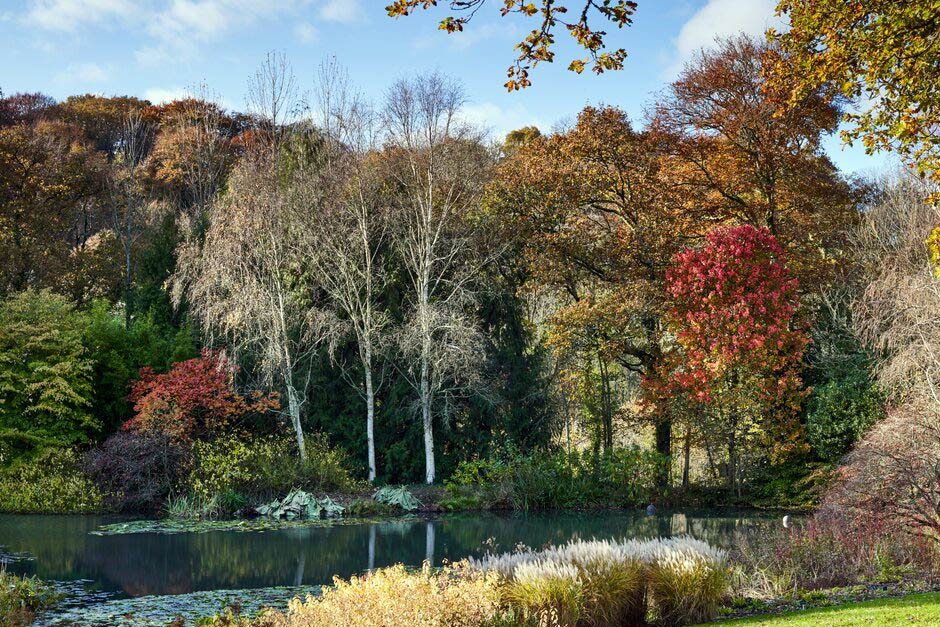 The Lake in all its autumn glory at Rosemoor