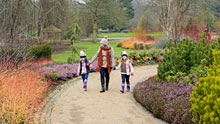 Visit Harlow Carr in winter