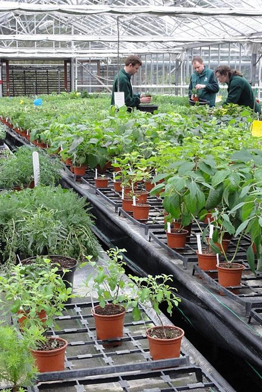 Plants grown in peat-free compost in the propagation department at RHS Garden Wisley