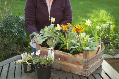 How To Plant A Pretty Pot Rhs Gardening