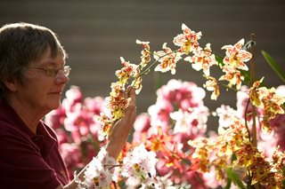 Woman with Oncidium
