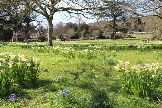 Naturalised bulbs at West Dean Gardens