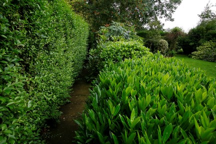 Shrubs: evergreen for specific situations / RHS Gardening