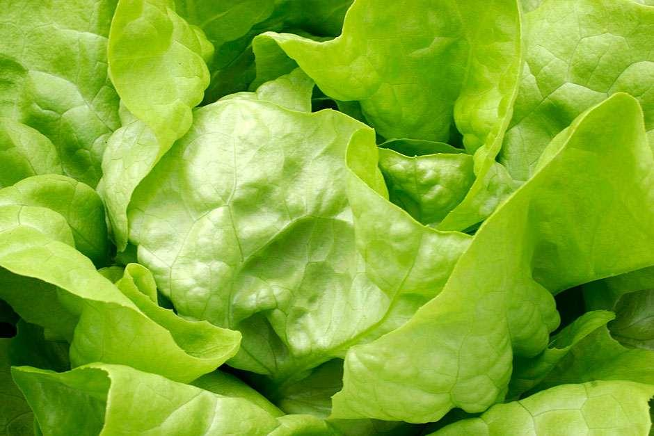 How to grow lettuce rhs gardening - How to store lettuce from garden ...
