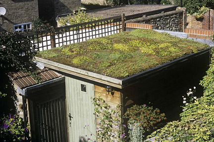 Green roof on shed in the garden of Valerie Legg and Simon Harding, Bury St Edmunds, Suffolk. Image: Tim Sandall/RHS