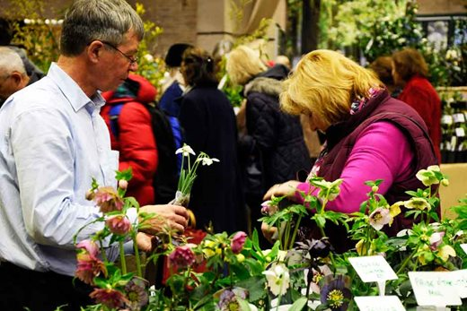 Plant sales at the show