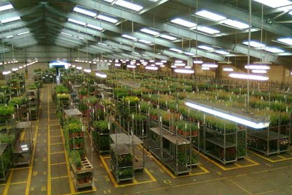 Finishing centre at Farplants