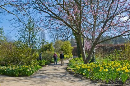 Spring displays at RHS Garden Harlow Carr