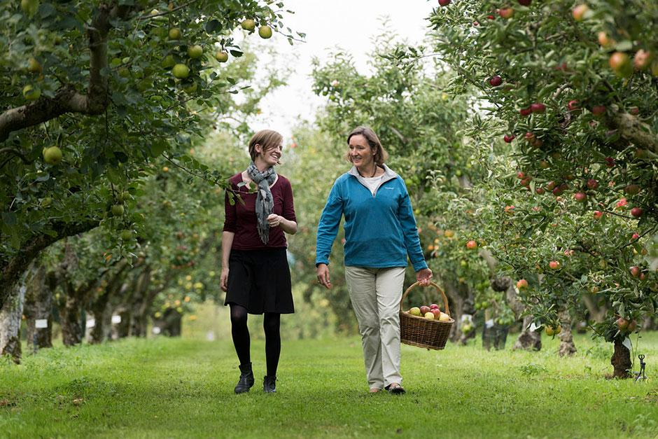 Visitors in the orchard