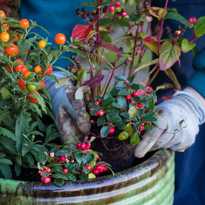 Your gateway to gardening advice and inspiration to help everyone get growing and feel better