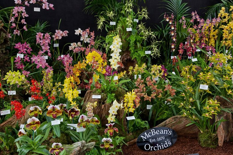 McBean's orchid display at Chelsea