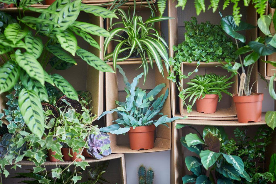 Marvelous Rhs Garden Wisley Days And Events In Surrey Rhs Gardening Interior Design Ideas Clesiryabchikinfo