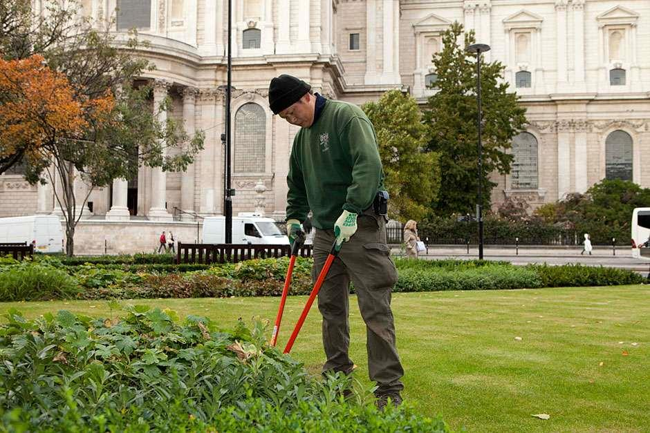 Maintaining gardens at St Paul's Catherdral