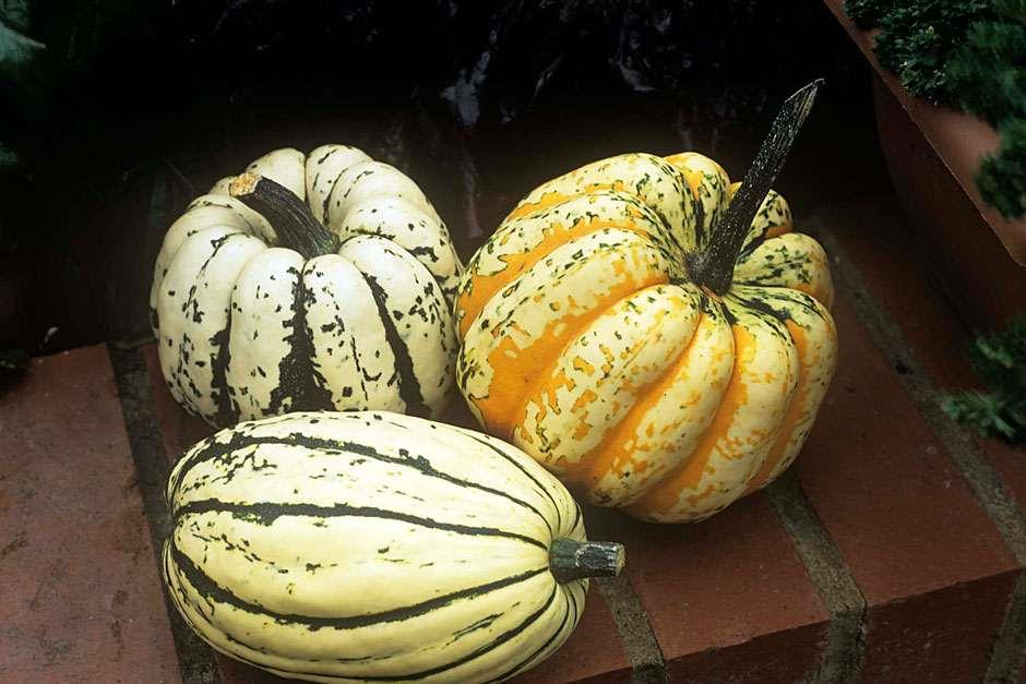 How To Grow Squash    Rhs Gardening