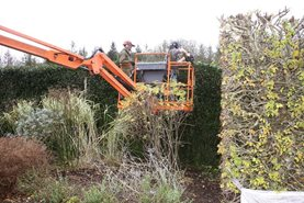 Using the MEWP to cut hedges
