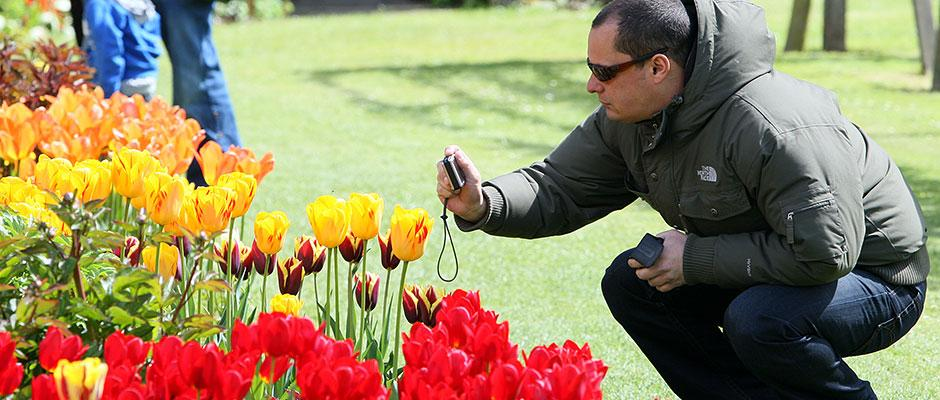 Visitor photographing tulips