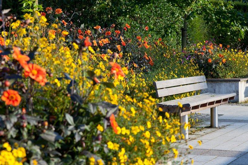 Pozitivne strane koronavirusa ... - Page 3 Rosemoor-hot-garden-940x627_1