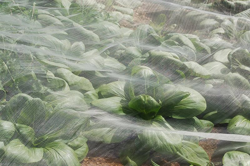 Agralan mesh crop protection