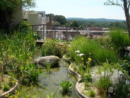 Roof Gardens And Balconies Rhs Gardening