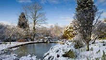 Harlow Carr in winter