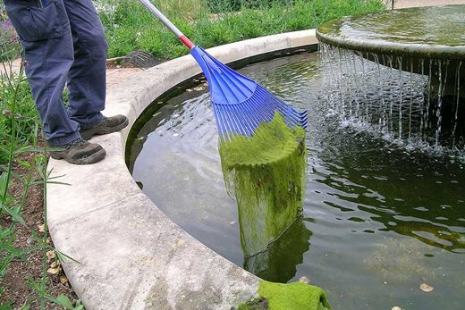 Removing blanket weed from a pond