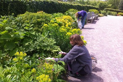 The seed team hard at work at RHS Garden Wisley