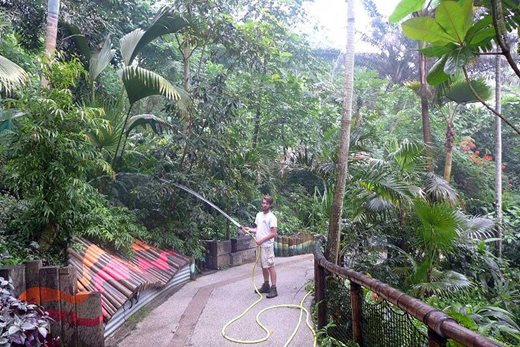 watering the massive plants in the Tropical biome