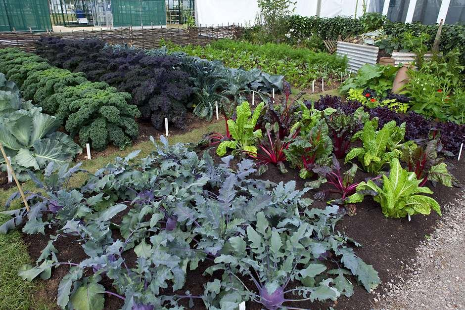 What kind of allotment do i want rhs gardening for Vegetable plot ideas