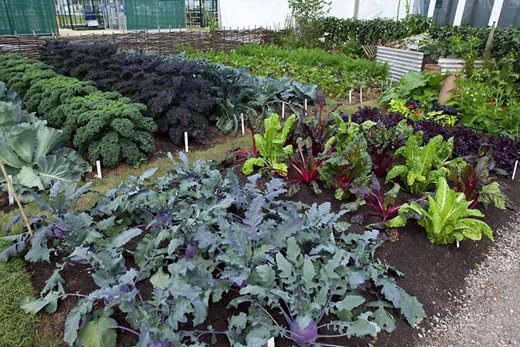 what kind of allotment do i want? / rhs gardening