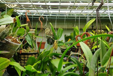 Artificial Lighting For Indoor Plants Rhs Gardening