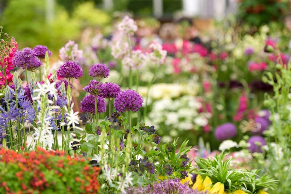 rhs chelsea flower show  / rhs gardening, Beautiful flower