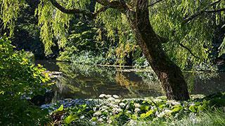 RHS Garden Rosemoor Part 90