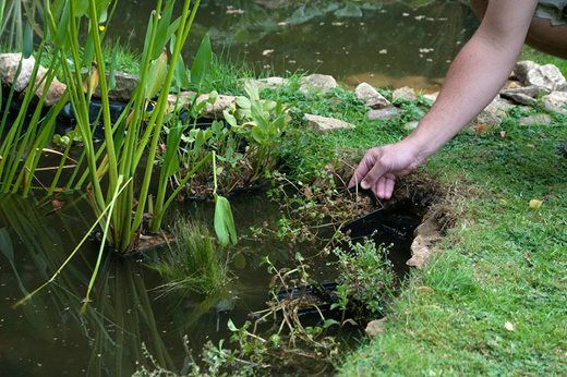 Read our articles about rhs partner gardens rhs gardening - Build pond wildlife haven ...