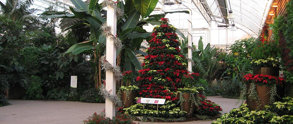 Christmas tree in the Wisley Glasshouse
