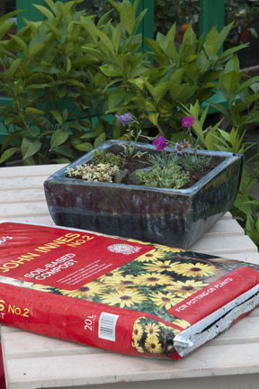 Planted container and John Innes potting compost