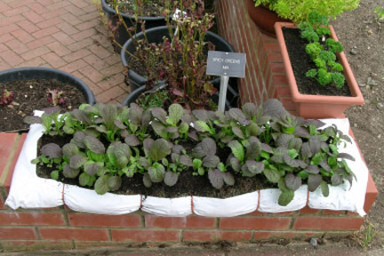 Herbs and salad leaves: growing in grow-bags