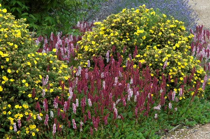 Shrubs Smaller For Year Round Interest Rhs Gardening
