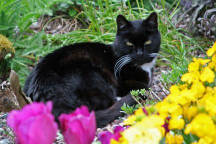 Garden Moggy