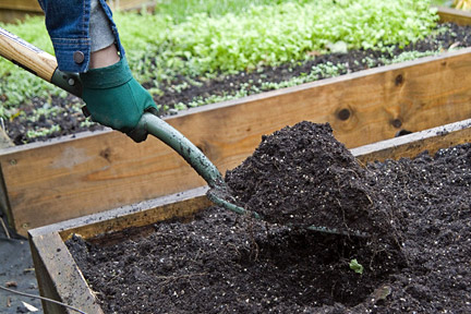 Adding compost to a raised bed