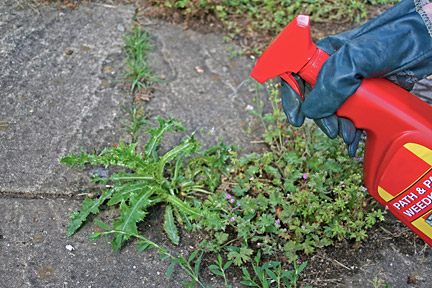 Using a spot treatment for weeds. Credit:RHS/Advisory.
