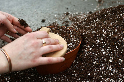 Sowing seed indoors. Credit: Neil Hepworth/RHS The Garden.