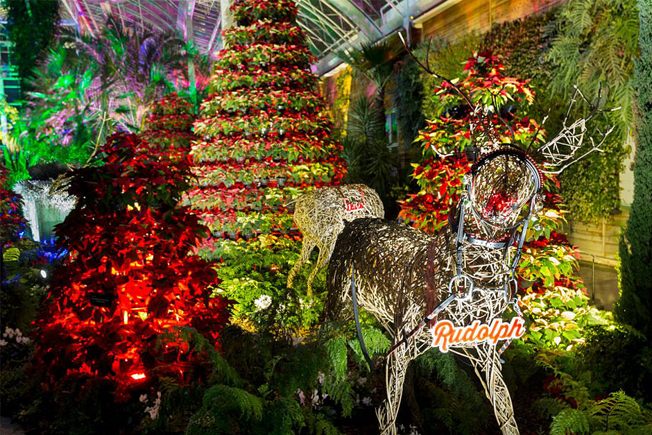 Festive fun at RHS Garden Wisley | Family days out & events in Surrey / RHS Gardening