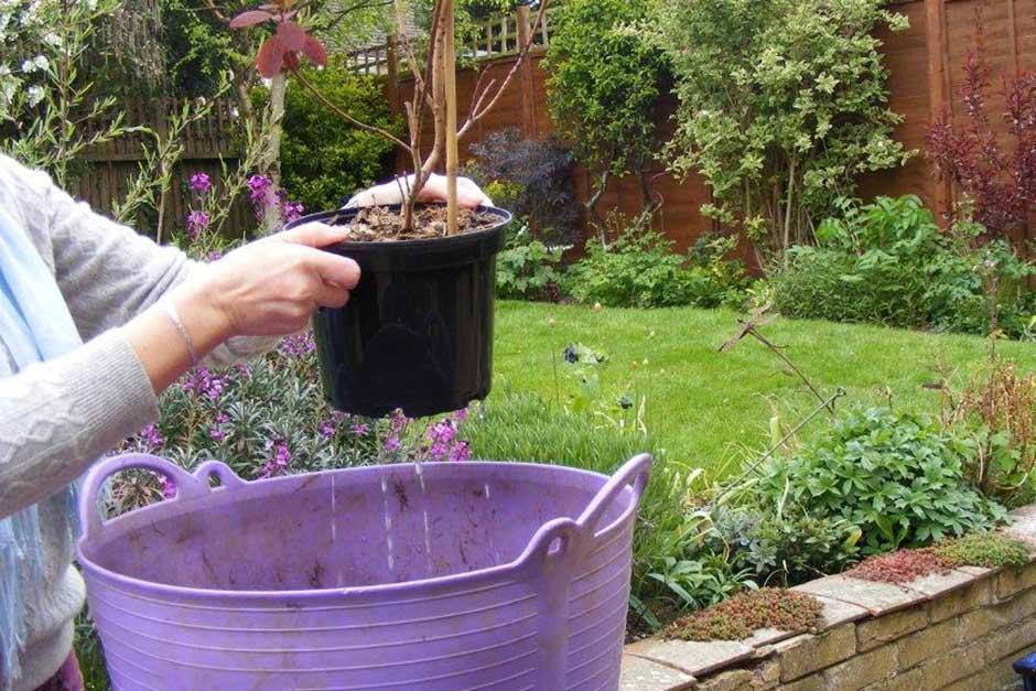How to plant a shrub / RHS Gardening