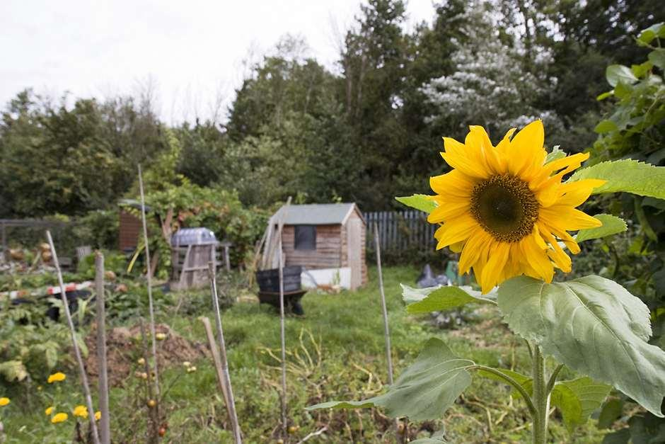 Growing Your Own Getting The Best From Your Allotment Rhs