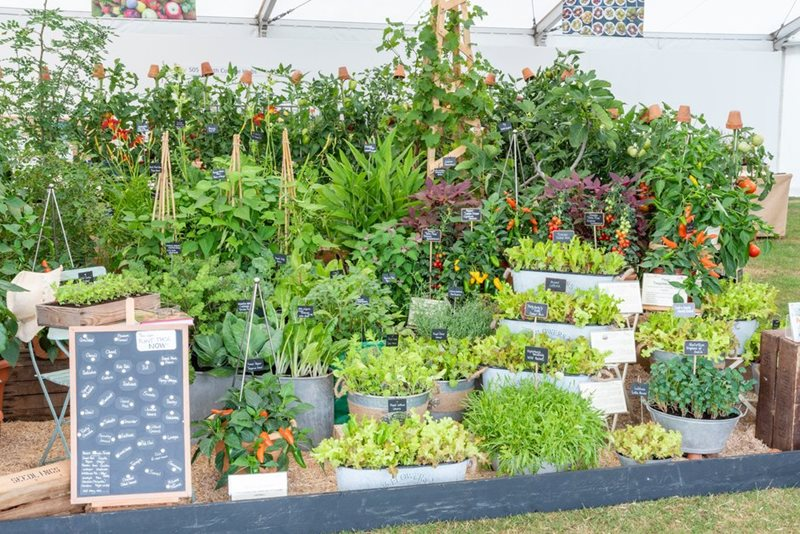 A display of vegetables in the Discover and Grow