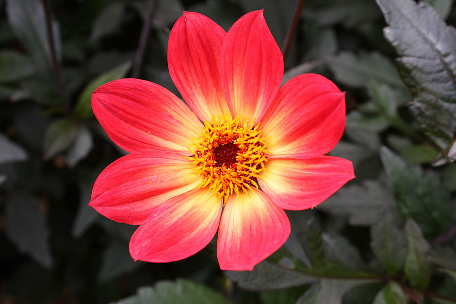 Help  Advice  U0026 Tips From The Rhs On All Kinds Of Plants
