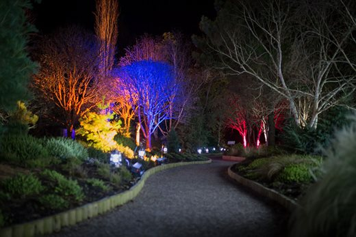 Illuminations at Rosemoor